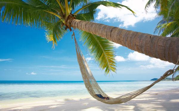 plage-cocotier